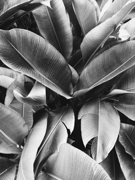 banana palm wallpaper tumblr motifs on pinterest 905 pins