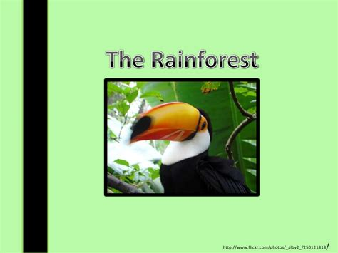 Rainforest Presentation Rainforest Powerpoint