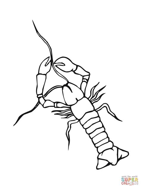 Crawfish Coloring Page Coloring Home Crayfish Coloring Page