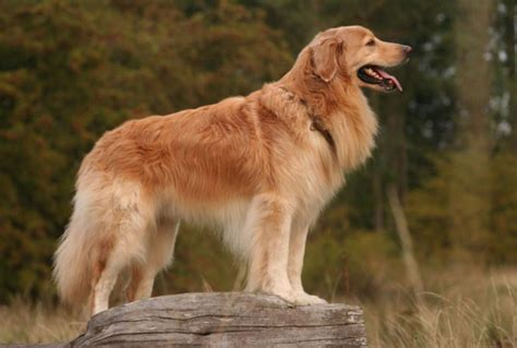 different of dogs different types of dogs pictures pet photos gallery n72awv1bz5