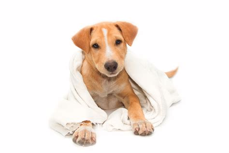 can dogs vinegar how vinegar can help keep your and your house clean pets potential