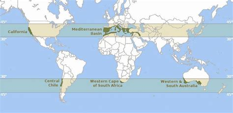 mediterranean climate regions oak tree designs