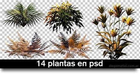 piante in photoxgraph piante in psd