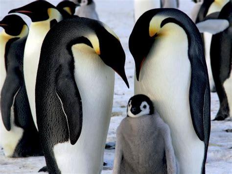 imagenes de invierno con animales 5 animales dise 241 ados para disfrutar el invierno sin