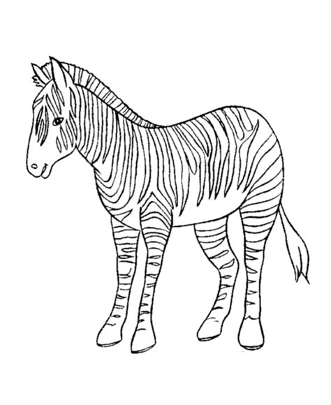 baby zebra coloring pages coloring home