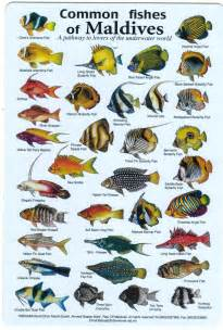 types of aquarium fish fishes of the maldives identification chart water resistant double sided printed on card then