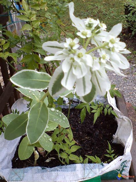 Fleur Verte Et Blanche by Photo Blanche Et Verte