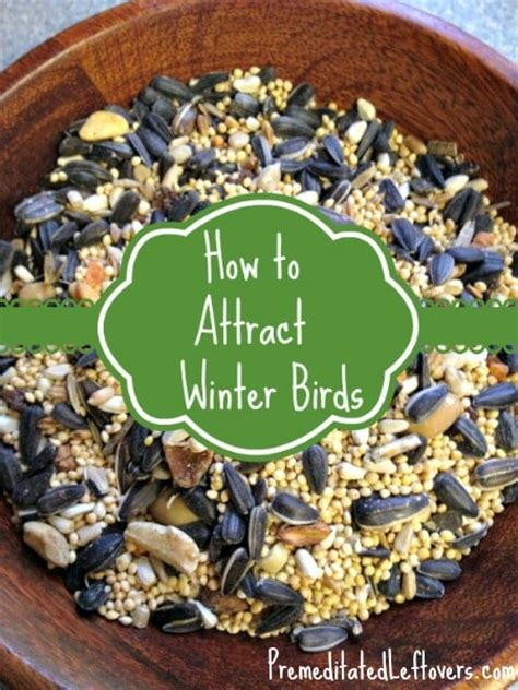 attracting birds to your backyard tips for attracting winter birds