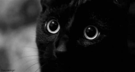 gif wallpaper ipod touch gif 真っ黒なのにかわいい 黒猫 の gifアニメ gif blog nobon