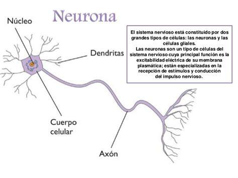Resumen Y Sus Partes by Neurona Resumen