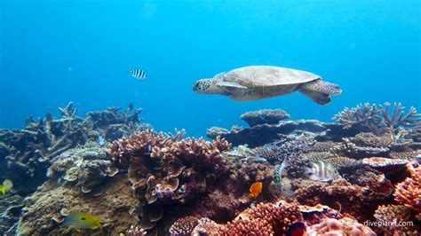 best place to dive the great barrier reef what are the best diving places on our great barrier reef