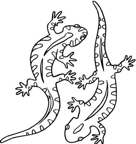 tiger salamander coloring page salamander 21 coloring page free printable coloring pages