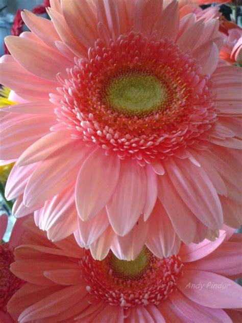 imagenes de flores asombrosas imagenes de flores acuaticas