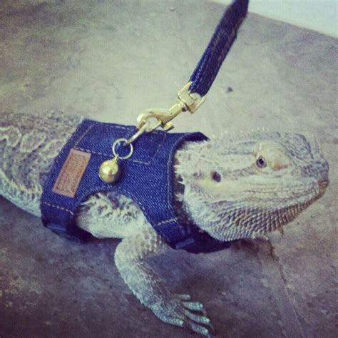 how often do bearded dragons go to the bathroom the 17 best images about bearded dragon on pinterest