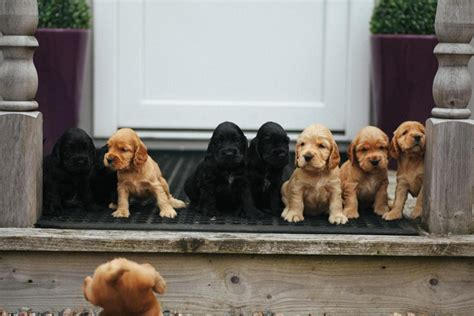 family puppy puppy family photo proves what unites us is cuter than what divides us huffpost