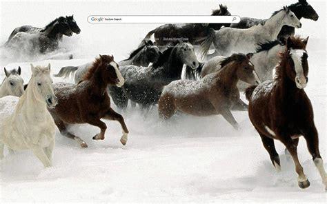 google themes horse snow horses google theme