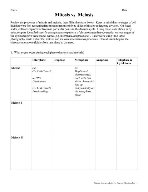 Mitosis Vs Meiosis Worksheet by 15 Best Images Of Mitosis Vs Meiosis Worksheet Answers