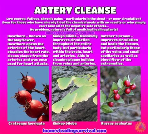 Artery Detox by Artery Cleanse More Info Here Http