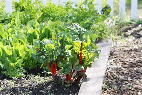 ten tips  vegetable gardening   drought green