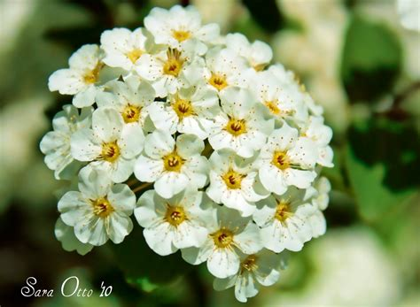 how do flowers get their color otto photography how do flower s get their color