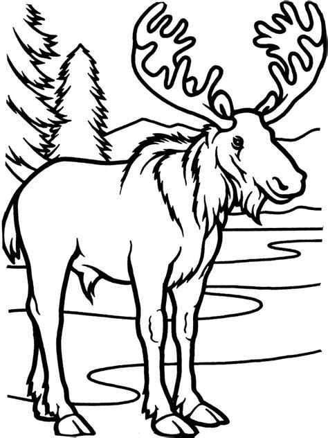 Coloring Book Pages Moose | free printable moose coloring pages for kids