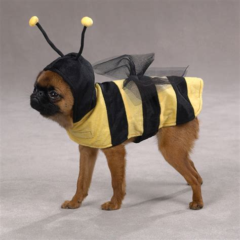 honey for dogs honey bee costume for dogs by casual canine baxterboo