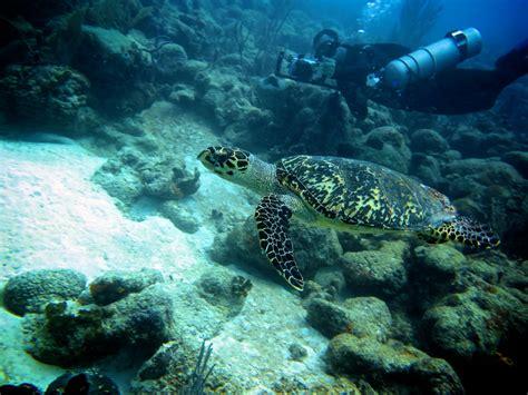 dive barbados diving in barbados