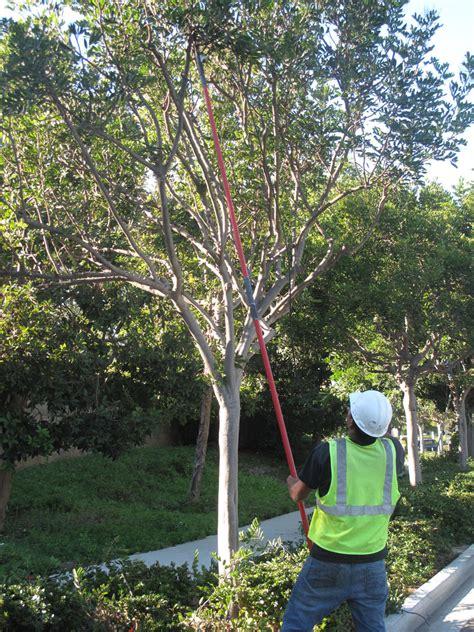 service san diego san diego tree services tree removal c h gardens
