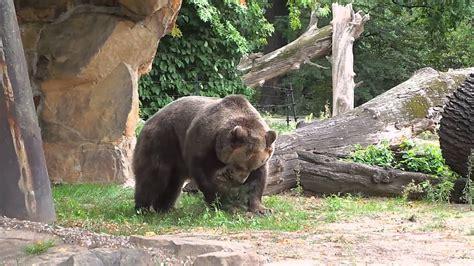 Restaurants Nahe Zoologischer Garten by D 246 Ner Zoologischer Garten Home Image Ideen