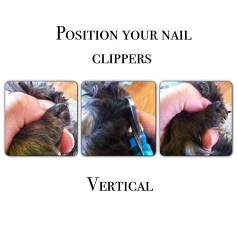 how to cut black nails grooming tips how to nail trimming black nails and ideas for other options if you don