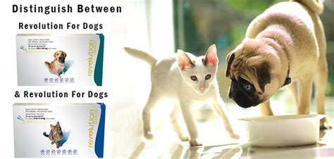 revolution for puppies and kittens distinguish between revolution for cats and revolution for dogs budgetpetworld