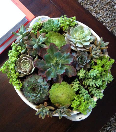 best 25 indoor succulent garden ideas on pinterest