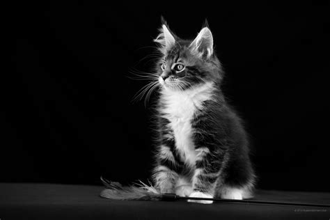 cat wallpaper tablet 2160x1440 cat wallpaper graceful wallpaper tablet images
