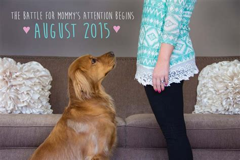 baby announcement with 50 adorable dogs who shared their family s pregnancy news in the best way times