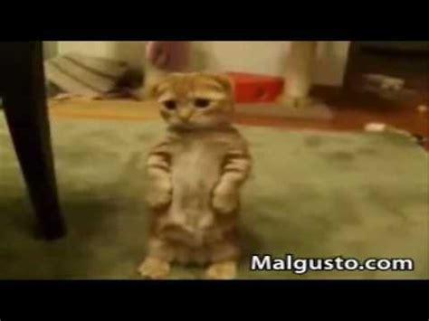 imagenes y videos graciosos animales divertidos gatos chistosos youtube