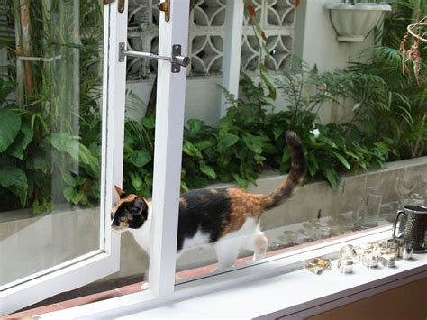 Cat Patio Door by Cat Flap Or Door Alternative Locklatch