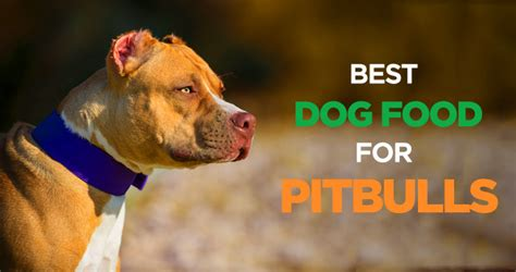 best puppy food for pitbulls pitbull feeding schedule
