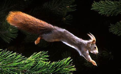 Imagenes De Animales Con Movimiento | imagenes de animales con movimiento imagenes con