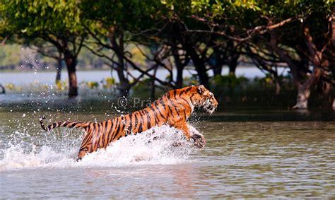 sundarbantours travel to nature with care image gallery sundarbans