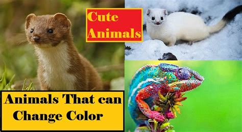 animals that change color 11 animals that change color how do animals change color