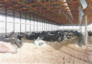 Small Barns And Sheds Small Scale Dairy Calf And Cattle Housing Center For
