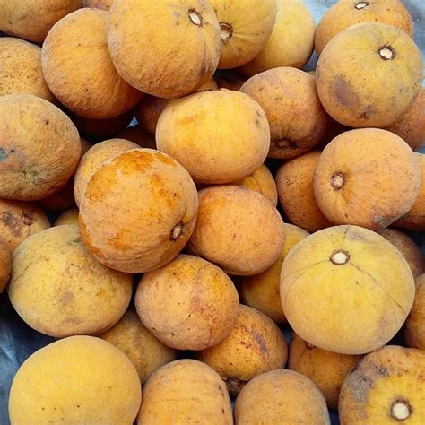 fruit dictionary santol tagalog to dictionary
