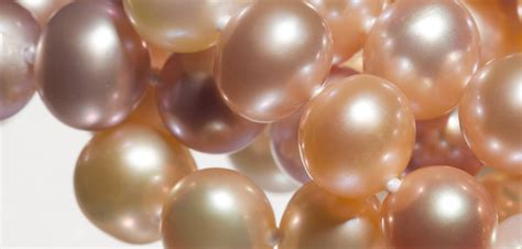 Freshwater Cultured Pearls Jewelry Wise