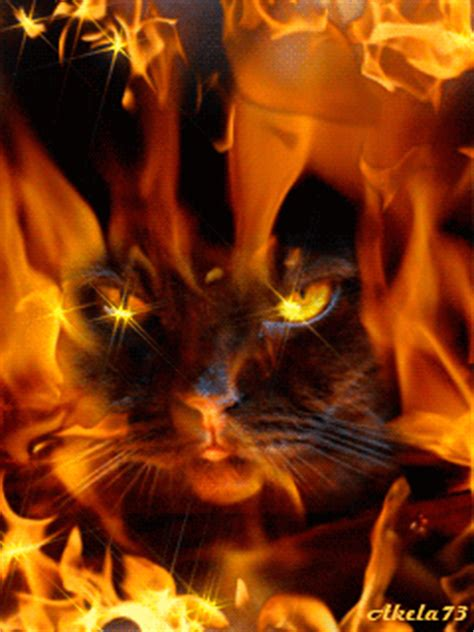 gif themes mobile9 download fiery cat symbian series 40 3rd edition 240x320