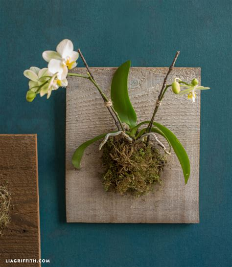 mounted orchids  succulents lia griffith