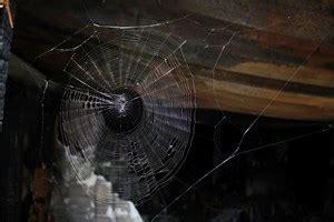 ameisenbefall in der wohnung spinnen in innsbrucker wohnhaus quot sache erledigt quot mieten