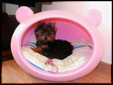 girl dog beds cute girl dog beds design house photos