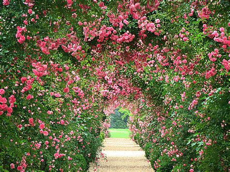 backyard rose gardens rose garden wallpaper wallpapersafari