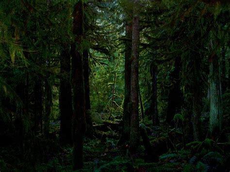 dewy dark forest amy tanathorn art