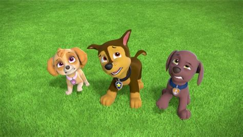 paw patrol breeds what are the breeds in paw patrol dogs breed sierramichelsslettvet